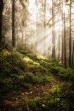 Diep nevelig bos stock afbeelding
