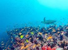 Diep waterkoraalrif stock afbeeldingen