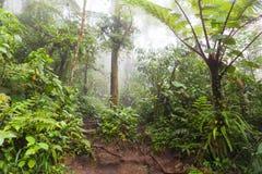 Diep in weelderig mistig regenwoud Stock Afbeeldingen