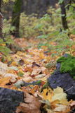 Diepe bosweg Royalty-vrije Stock Afbeelding