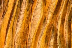 Diepe gegroefte houten textuurachtergrond Royalty-vrije Stock Foto's