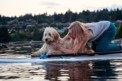 Diepe Inhampeddel met Hond royalty-vrije stock afbeelding