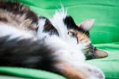 Diepe kattenslaap Stock Foto's