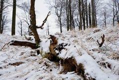 Diepe melancholie Gevallen boomstam op steenachtige heuvel Sneeuw gladde keien op heuvel Stock Foto's