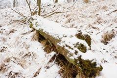 Diepe melancholie Gevallen boomstam op steenachtige heuvel Sneeuw gladde keien op heuvel Royalty-vrije Stock Fotografie