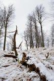 Diepe melancholie Gevallen boomstam op steenachtige heuvel Sneeuw gladde keien op heuvel Stock Afbeeldingen