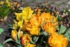 Diepe oranje bloemen in een bandpot stock afbeelding