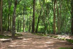 Diepe tropische wildernissen in Thailand van Zuidoost-Azië in Augustus stock foto