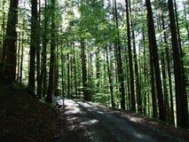 Diepe zonneschijnschaduwen binnen het vergoelijkte bos stock afbeelding