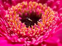 Diepgaand kijk van een rosa bloem Stock Afbeeldingen