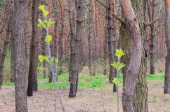 Diepten van een bos Stock Foto