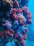 Diepzee en koraalrif, kleurrijke koralen in oceaanlandschap Stock Afbeelding