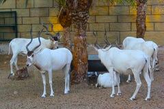 dier in de dierentuin stock foto's