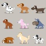 Dier: De inzamelingen van honden Stock Fotografie