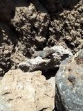 Dier en rotsen in de zon royalty-vrije stock fotografie