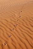 Dier foothpath in het zand Royalty-vrije Stock Foto