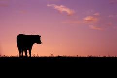 Dier - het Silhouet van de Koe Stock Afbeelding
