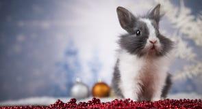 Dier, Konijn, konijntje op Kerstmisachtergrond royalty-vrije stock foto's