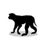 Dier van het de primaat het zwarte silhouet van de Macaqueaap royalty-vrije illustratie