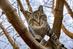 Dier; verdwaalde kat Stock Afbeelding