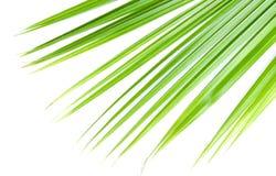 Dierbare palm Stock Fotografie