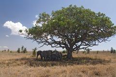 Dieren 050 olifant royalty-vrije stock afbeeldingen