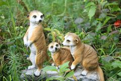 dieren Royalty-vrije Stock Foto's