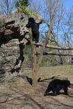 dieren stock fotografie