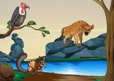 dieren Royalty-vrije Stock Afbeelding