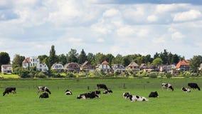 Dieren acobarda a Holanda imagem de stock