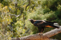 Dieren bij Currumbin-het Wildpark stock foto's