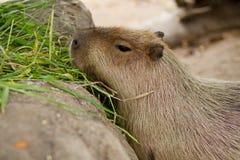 Dieren bij de dierentuin. Stock Afbeelding