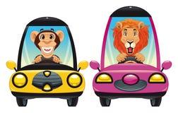Dieren in de auto: Aap en Leeuw Stock Afbeeldingen