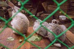 Dieren in de dierentuin Royalty-vrije Stock Foto's