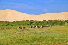 Dieren in de oase Peruviaanse woestijn royalty-vrije stock foto
