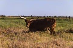 Dieren in de reserve op weiland in de steppe stock foto's