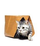 Dieren, die de kat laten uit de zak, katje Stock Foto's