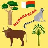 Dieren en planten van Madagascar: baobabboom, zeboe, ravenala Stock Fotografie