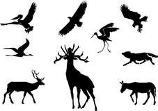 Dieren en vogels Royalty-vrije Stock Foto