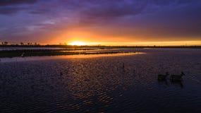 Dieren op de binnenwateren bij zonsondergang royalty-vrije stock fotografie