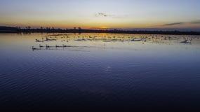 Dieren op de binnenwateren bij zonsondergang stock afbeelding