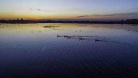 Dieren op de binnenwateren bij zonsondergang stock foto's