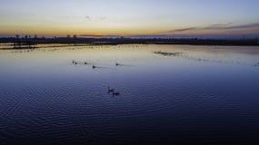 Dieren op de binnenwateren bij zonsondergang stock foto
