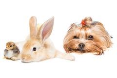 dieren op witte achtergrond royalty-vrije stock afbeelding