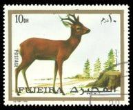 Dieren, Roe Deer stock foto's