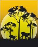 Dieren van Afrika Royalty-vrije Stock Foto's