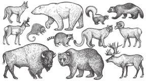 Dieren van de grote reeks van Noord-Amerika royalty-vrije illustratie