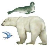 Dieren van het Noordpoolgebied Stock Afbeeldingen