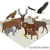 Dieren van het Yellowstone de Nationale Park Stock Fotografie