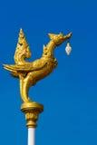 Dieren van zwaan de gouden Mythic Stock Fotografie